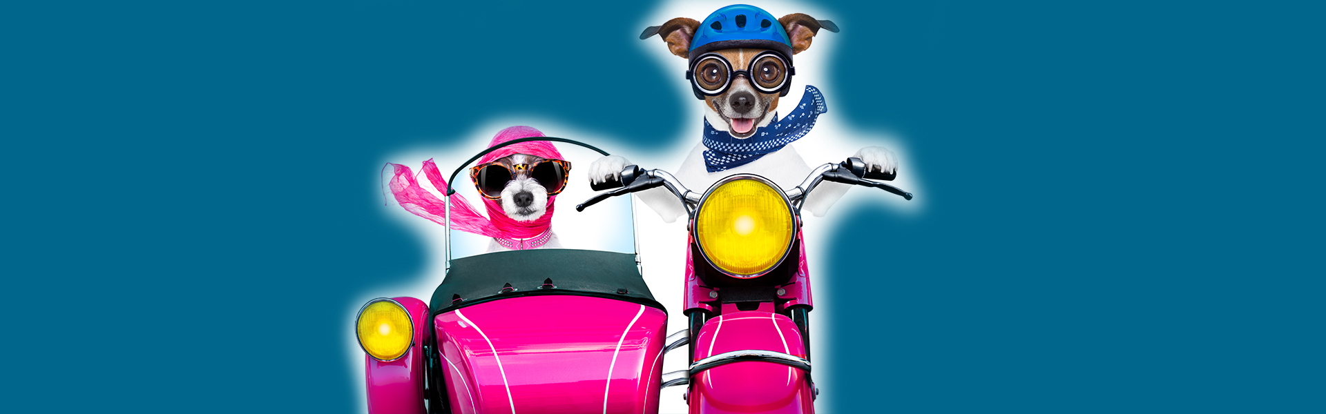 Dogs on motorcycles.jpg